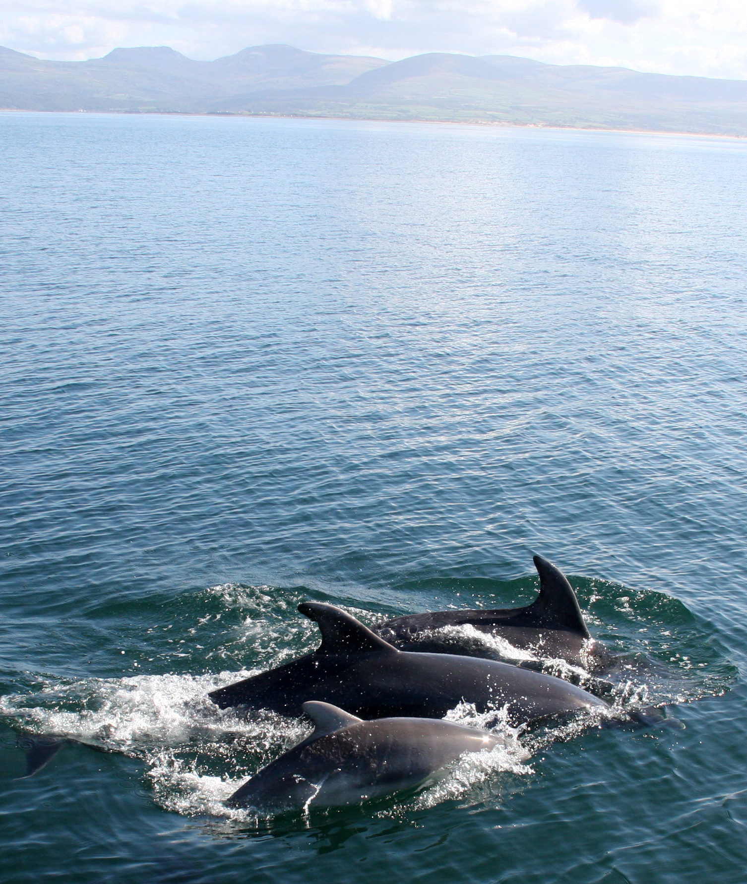 Abundance and Distribution of Coastal Bottlenose Dolphins