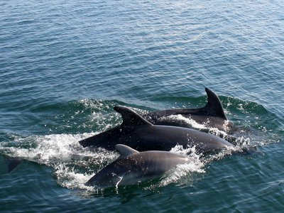 Abundance and Distribution of Coastal Bottlenose Dolphins