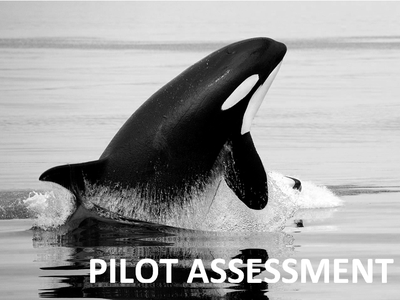 Pilot Assessment of Abundance and Distribution of Killer Whales