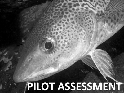 Pilot Assessment of Mean Maximum Length of Fish