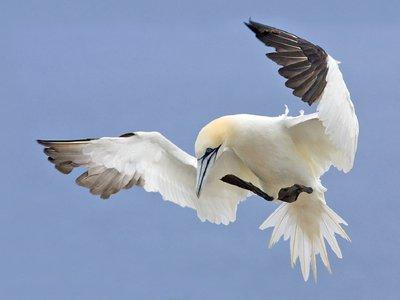 Succès/échec de la reproduction des oiseaux de mer