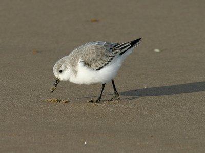 Abondance des oiseaux de mer
