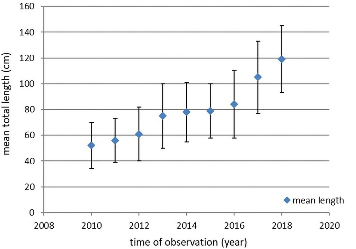 Figure 3: Development of the mean total length (cm ± SD) of recaptured sturgeons released in the French Gironde system over time