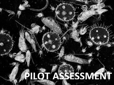 Pilot Assessment of Changes in Plankton Diversity