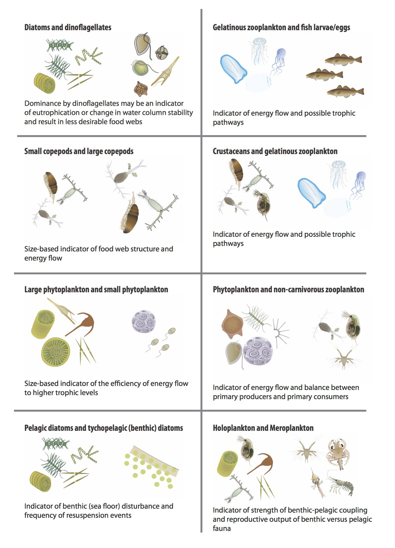 Changes In Phytoplankton And Zooplankton Communities